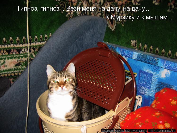 Котоматрица: Гипноз, гипноз... Вези меня на дачу, на дачу... К Мурзику и к мышам...