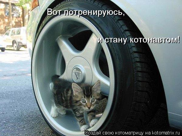 Котоматрица: Вот потренируюсь, и стану котонавтом!