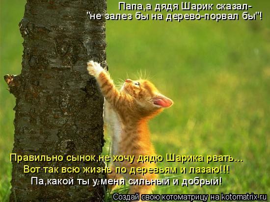 """Котоматрица: Папа,а дядя Шарик сказал- """"не залез бы на дерево-порвал бы""""! Па,какой ты у меня сильный и добрый! Правильно сынок,не хочу дядю Шарика рвать... Во"""