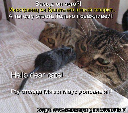 Котоматрица: Hello dear cats! Вась,а он чего?! Иностранец он.Кушать его нельзя говорит... А ты ему ответь.Только повежливей! Гоу отсюда Микки Маус долбаный!!!