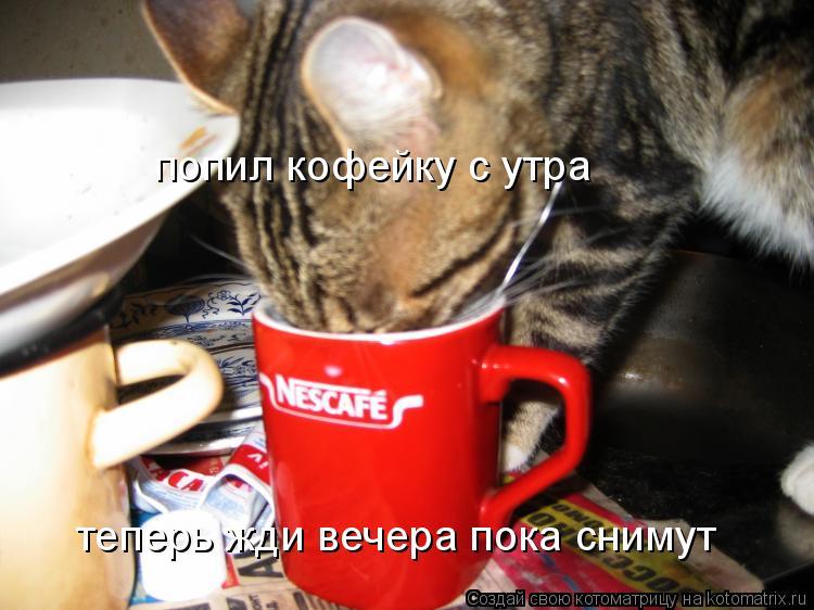 Котоматрица: попил кофейку с утра теперь жди вечера пока снимут