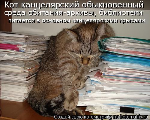 Котоматрица: Кот канцелярский обыкновенный среда обитания-архивы, библиотеки питается в основном канцелярскими крысами
