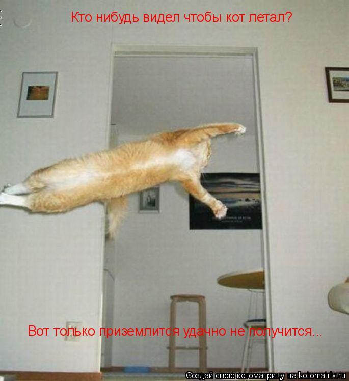Котоматрица: Кто нибудь видел чтобы кот летал?  Вот только приземлится удачно не получится...
