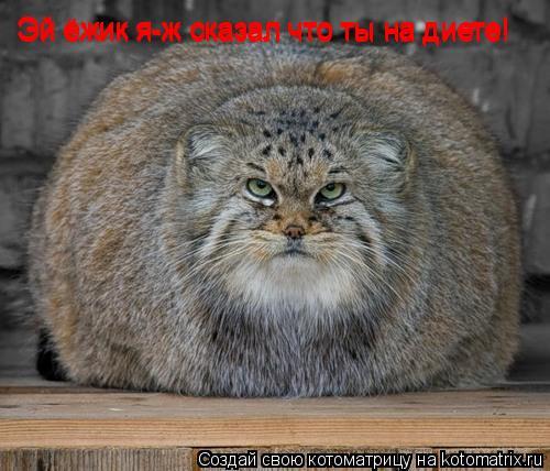 Котоматрица: Эй ёжик я-ж сказал что ты на диете! Эй ёжик я-ж сказал что ты на диете! Эй ёжик я-ж сказал что ты на диете!