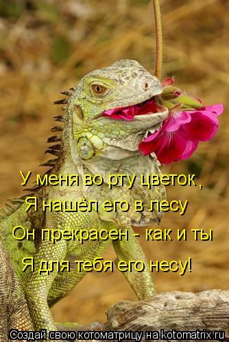 Котоматрица: У меня во рту цветок  Я нашёл его в лесу  Он прекрасен - как и ты  Я для тебя его несу! ,