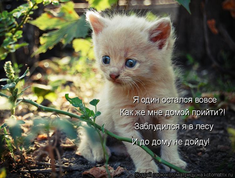 Котоматрица: Я один остался вовсе Как же мне домой прийти?! Заблудился я в лесу  И до дому не дойду!