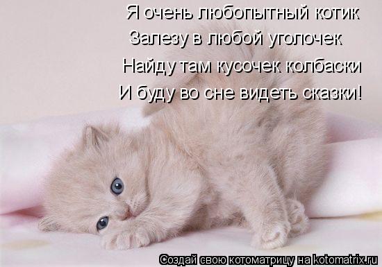 Котоматрица: Я очень любопытный котик Залезу в любой уголочек  Найду там кусочек колбаски И буду во сне видеть сказки!