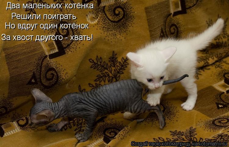 Котоматрица: Два маленьких котёнка Решили поиграть Но вдруг один котёнок За хвост другого - хвать!