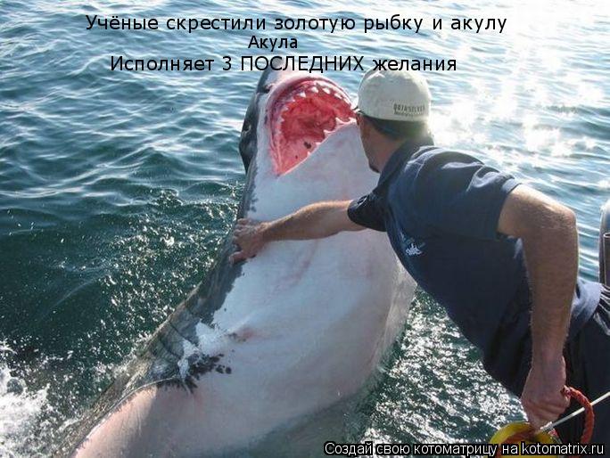 Котоматрица: Учёные скрестили золотую рыбку и акулу Исполняет 3 ПОСЛЕДНИХ желания Акула
