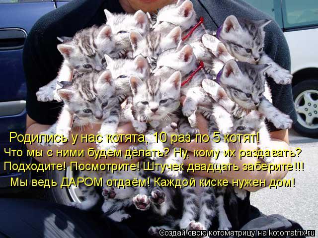 Котоматрица: Родились у нас котята, 10 раз по 5 котят! Что мы с ними будем делать? Ну, кому их раздавать? Подходите! Посмотрите! Штучек двадцать заберите!!! Мы
