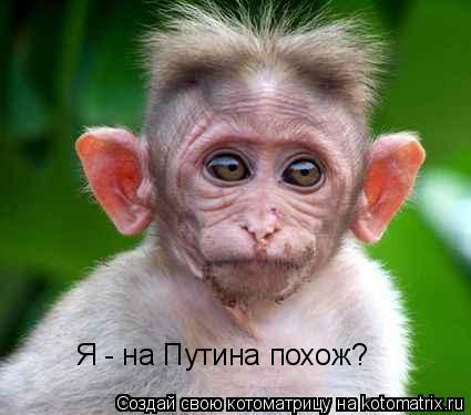 Котоматрица: Я - на Путина похож?