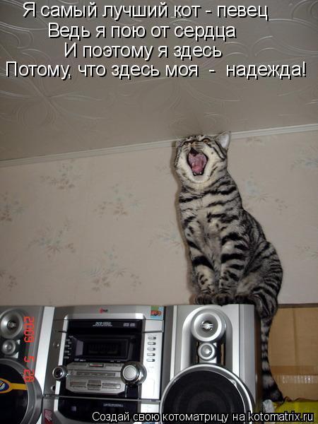 Котоматрица: Я самый лучший кот - певец Ведь я пою от сердца И поэтому я здесь Потому, что здесь моя  -  надежда!
