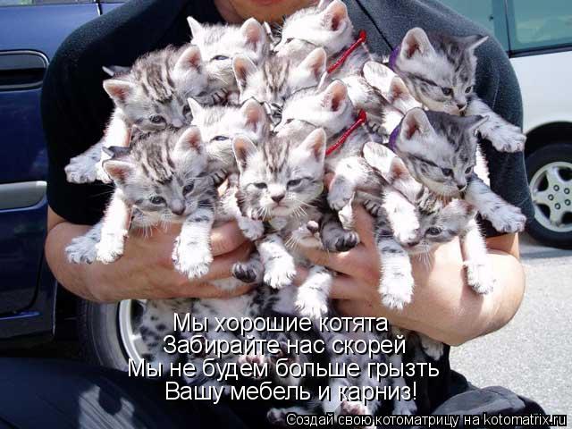Котоматрица: Мы хорошие котята Забирайте нас скорей Мы не будем больше грызть Вашу мебель и карниз!