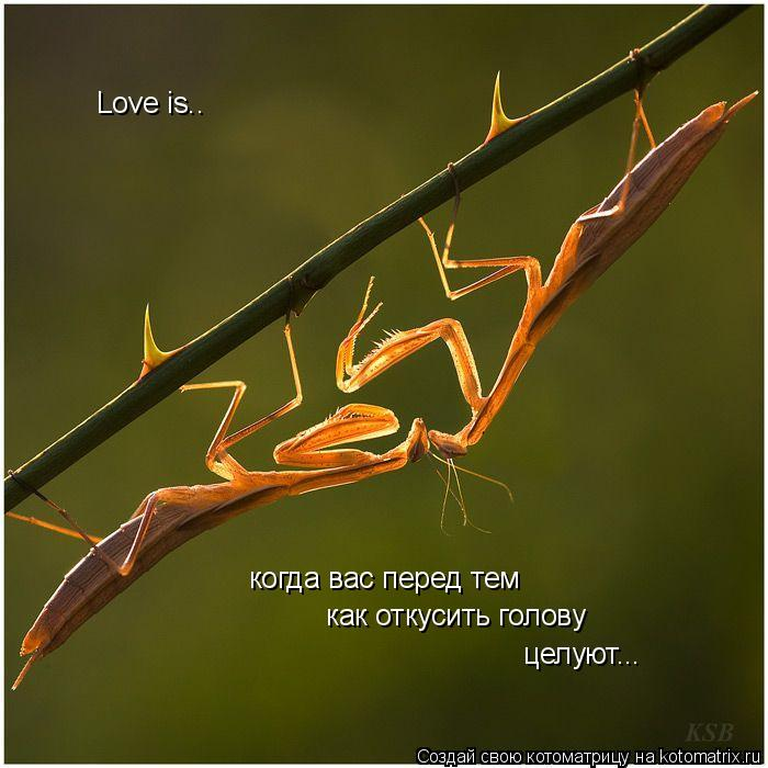 Котоматрица: Love is.. когда вас перед тем  как откусить голову целуют...