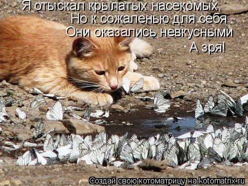 Котоматрица: Я отыскал крылатых насекомых , Но к сожаленью для себя Они оказались невкусными А зря!