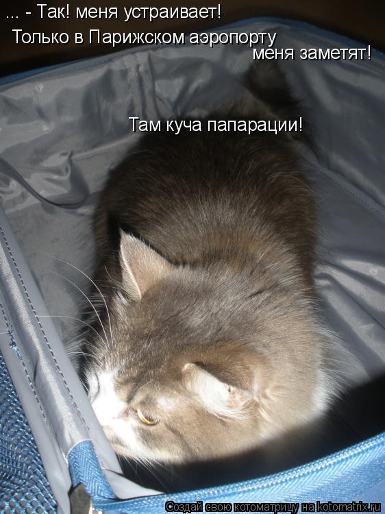 Котоматрица: ... - Так! меня устраивает! Только в Парижском аэропорту  меня заметят! Там куча папарации!