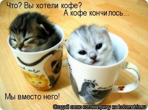 Котоматрица: Что? Вы хотели кофе? А кофе кончилось... Мы вместо него!