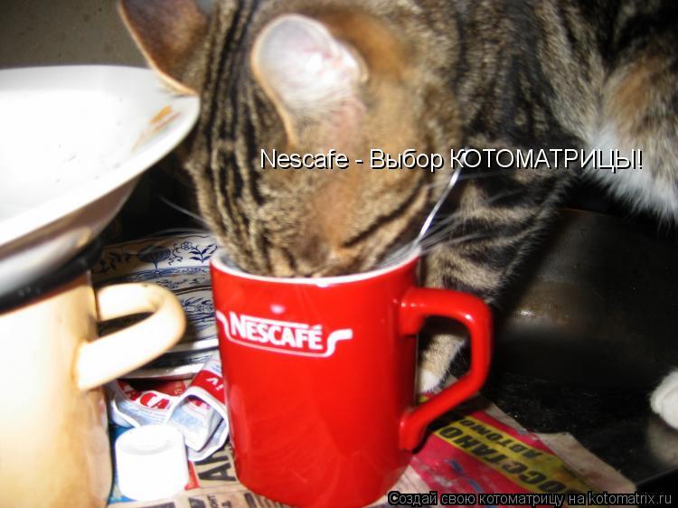 Котоматрица: Nescafe - Выбор КОТОМАТРИЦЫ!