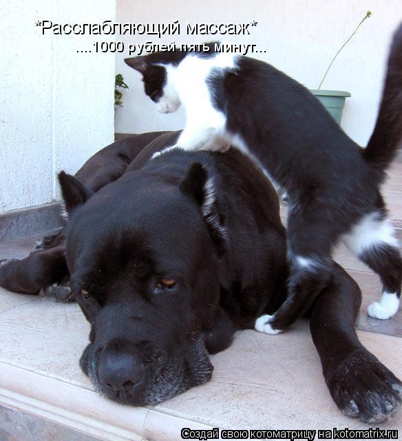 Котоматрица: *Расслабляющий массаж* ....1000 рублей пять минут...