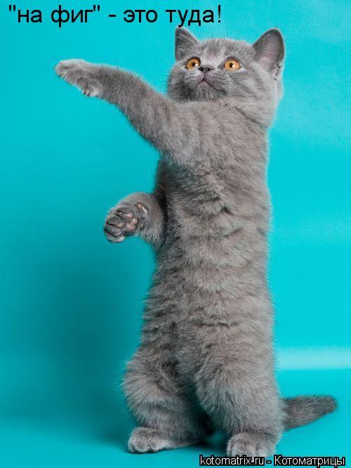 """Котоматрица: """"на фиг"""" - это туда!"""