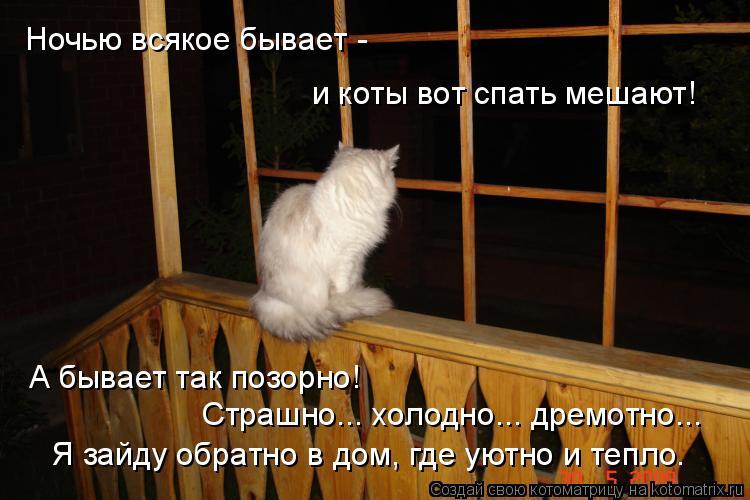 Котоматрица: Ночью всякое бывает - и коты вот спать мешают! А бывает так позорно! Страшно... холодно... дремотно... Я зайду обратно в дом, где уютно и тепло.