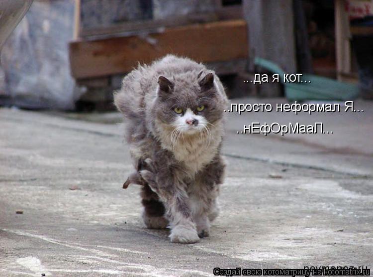 Котоматрица: ...да я кот... ..просто неформал Я... ..нЕфОрМааЛ...