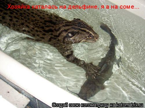 Котоматрица: Хозяйка каталась на дельфине, я а на соме...
