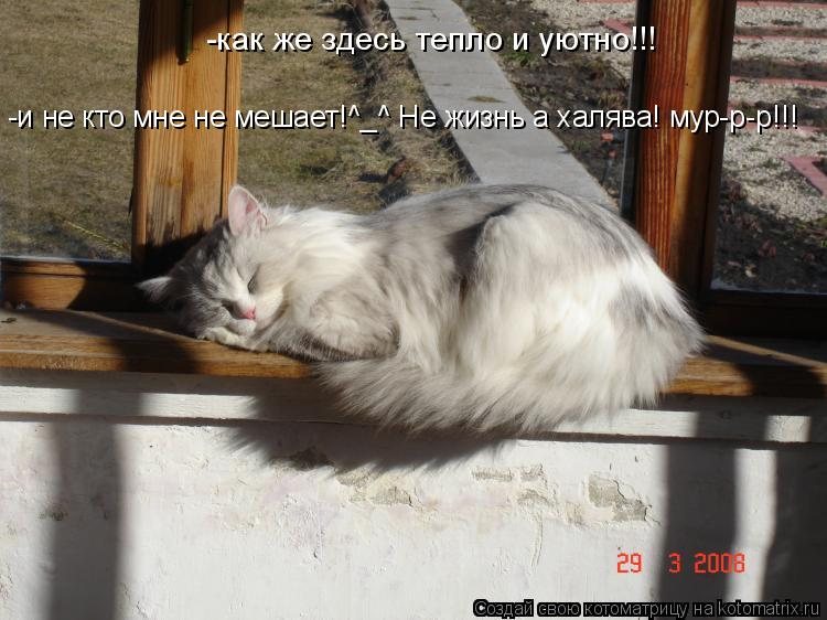 Котоматрица: -как же здесь тепло и уютно!!! -и не кто мне не мешает!^_^ Не жизнь а халява! мур-р-р!!!