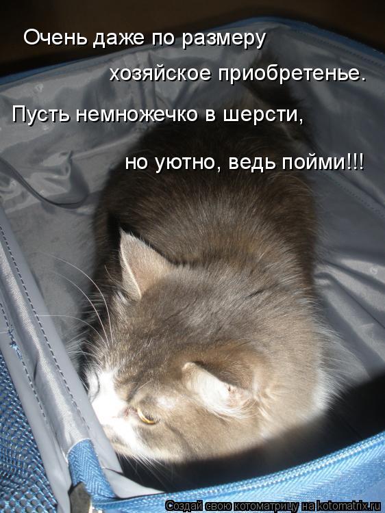 Котоматрица: Очень даже по размеру хозяйское приобретенье. Пусть немножечко в шерсти, но уютно, ведь пойми!!!