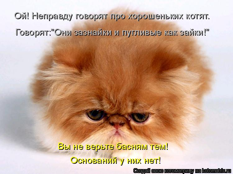 """Котоматрица: Ой! Неправду говорят про хорошеньких котят. Говорят:""""Они зазнайки и пугливые как зайки!"""" Вы не верьте басням тем! Оснований у них нет!"""