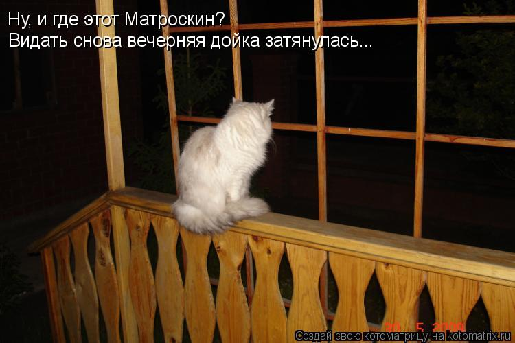 Котоматрица: Ну, и где этот Матроскин? Видать снова вечерняя дойка затянулась...