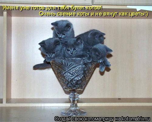 Котоматрица: Уменя уже готов для тебя букет котов Уменя уже готов для тебя букет котов! Очень свежие коты и не вянут как цветы:)