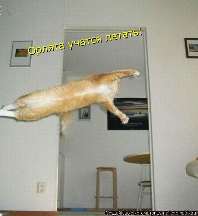 Котоматрица: Орлята учатся летать!