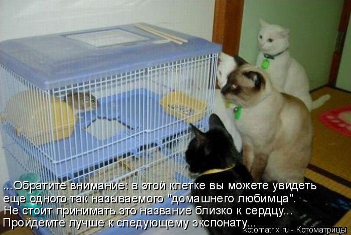 """Котоматрица: ...Обратите внимание: в этой клетке вы можете увидеть  еще одного так называемого """"домашнего любимца"""". Не стоит принимать это название близко"""