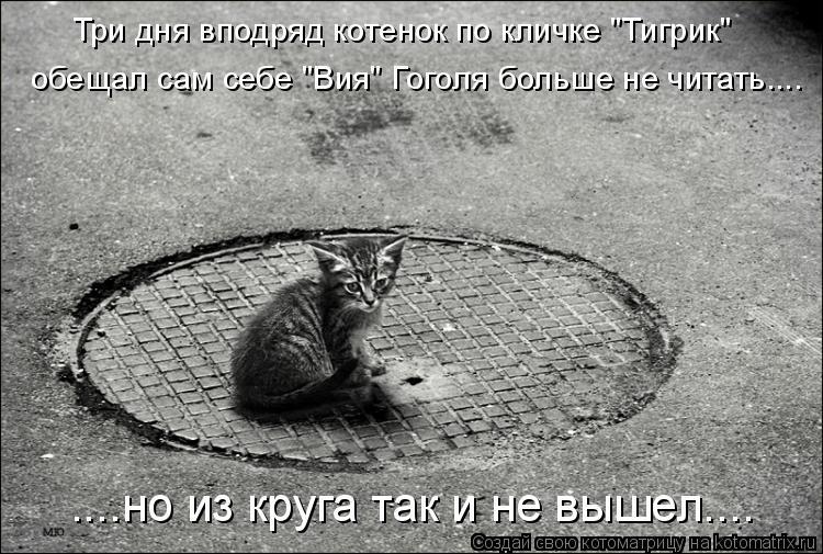 """Котоматрица: Три дня вподряд котенок по кличке """"Тигрик""""  обещал сам себе """"Вия"""" Гоголя больше не читать.... ....но из круга так и не вышел...."""