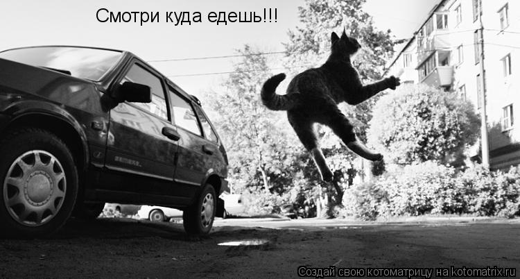 Котоматрица: Смотри куда едешь!!!
