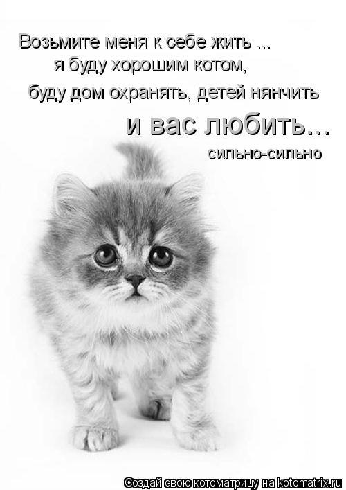Котоматрица: Возьмите меня к себе жить ...  я буду хорошим котом,  буду дом охранять, детей нянчить и вас любить... сильно-сильно
