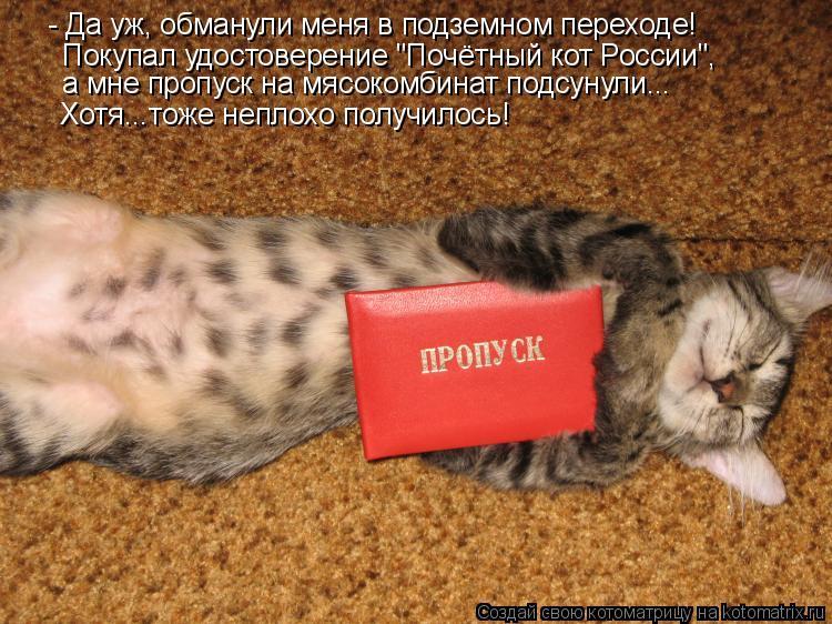 """Котоматрица: - Да уж, обманули меня в подземном переходе! Покупал удостоверение """"Почётный кот России"""", а мне пропуск на мясокомбинат подсунули... Хотя...тож"""