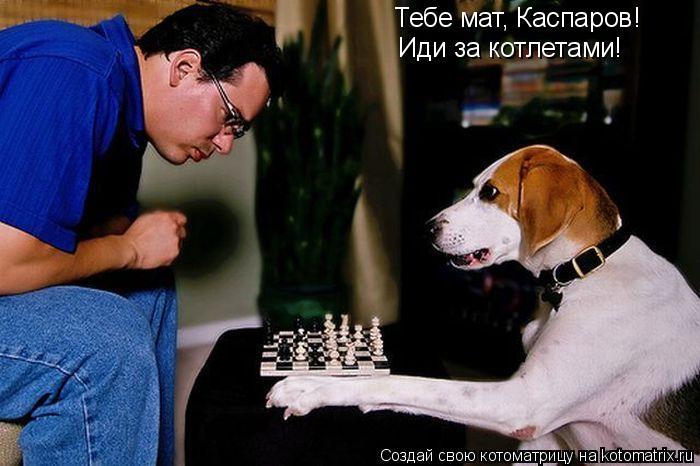 Котоматрица: Тебе мат, Каспаров! Иди за котлетами!