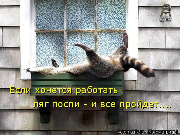 Котоматрица: Если хочется работать- ляг поспи - и все пройдет....