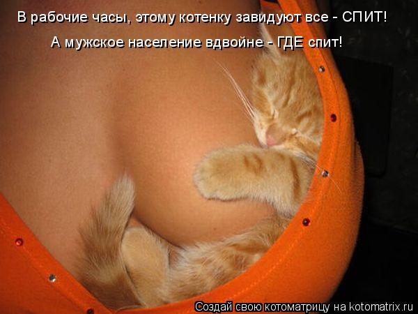 Котоматрица: В рабочие часы, этому котенку завидуют все - СПИТ! А мужское население вдвойне - ГДЕ спит!