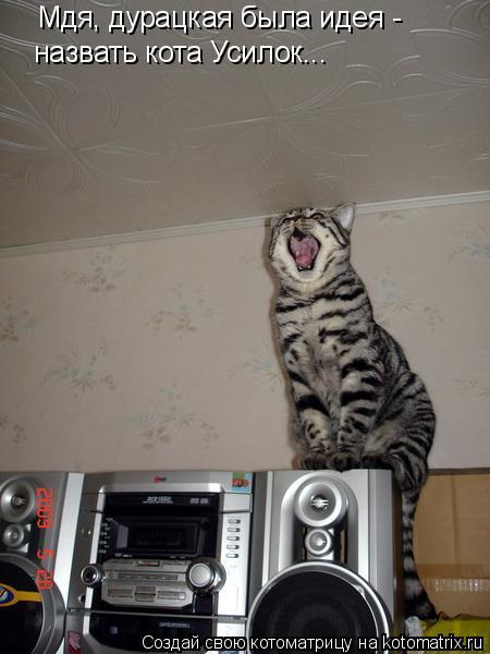 Котоматрица: Мдя, дурацкая была идея -  назвать кота Усилок...
