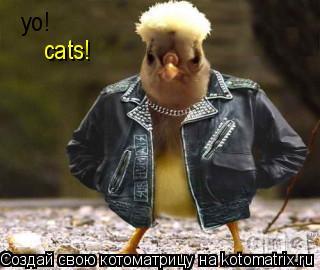 Котоматрица: yo!  cats!
