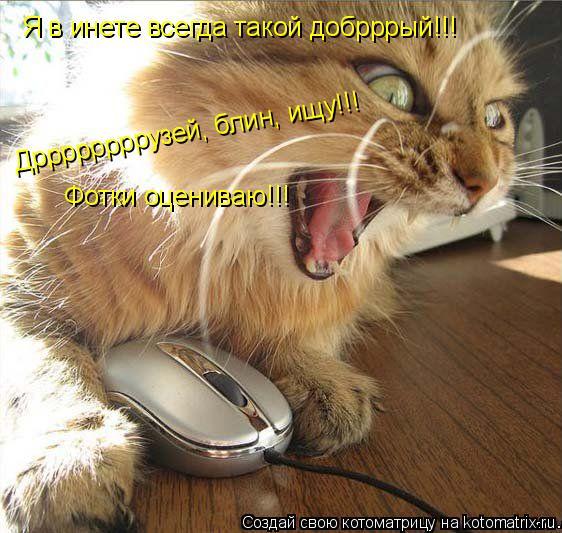 Котоматрица: Я в инете всегда такой добрррый!!! Дррррррррузей, блин, ищу!!! Фотки оцениваю!!!