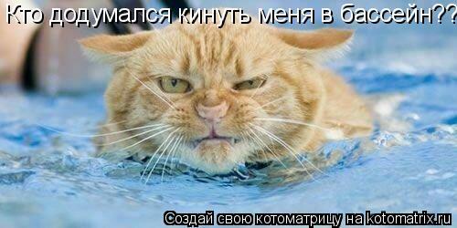 Котоматрица: Кто додумался кинуть меня в бассейн??