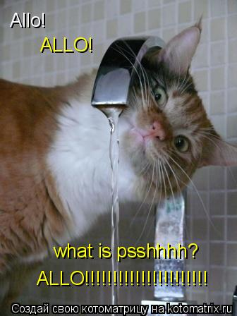 Котоматрица: Allo! what is psshhhh? ALLO!!!!!!!!!!!!!!!!!!!!!! ALLO!