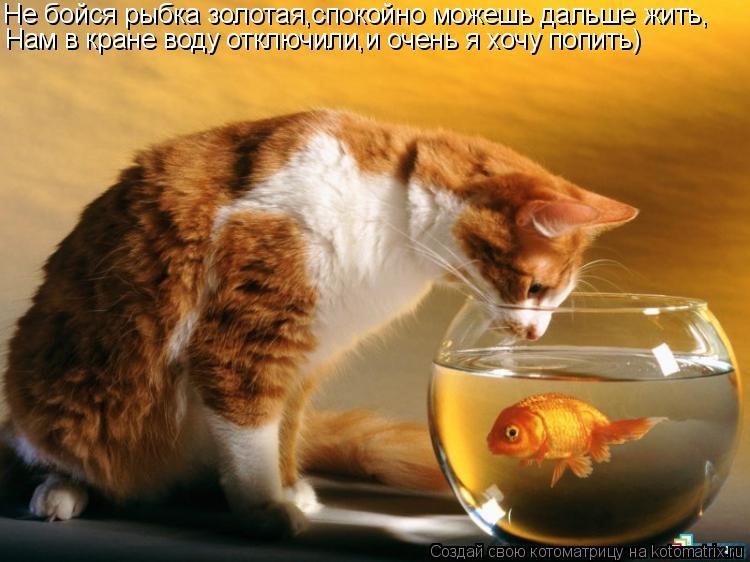 Котоматрица: Не бойся рыбка золотая,спокойно можешь дальше жить, Нам в кране воду отключили,и очень я хочу попить)