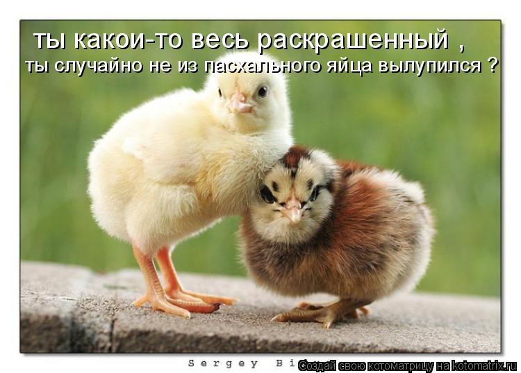 Котоматрица: ты какои-то весь раскрашенный , ты случайно не из пасхального яйца вылупился ?