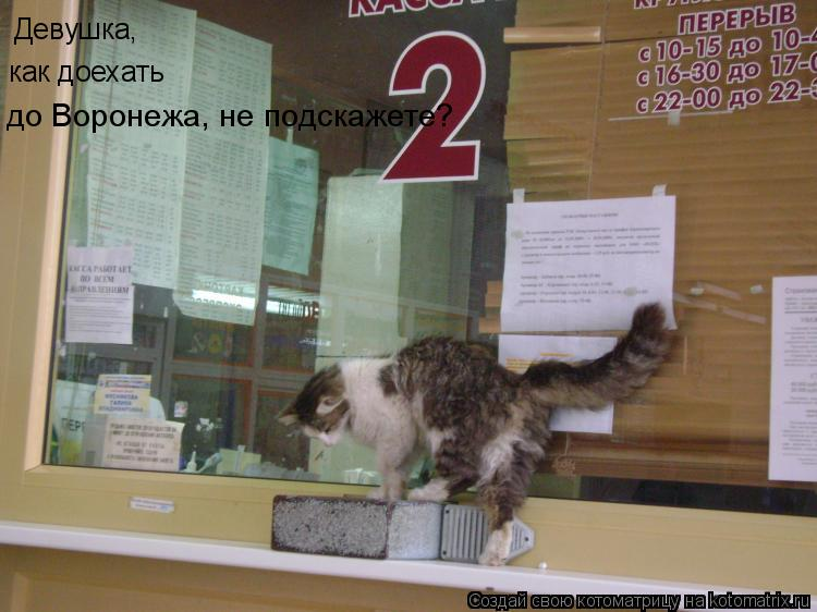 Котоматрица: Девушка, как доехать до Воронежа, не подскажете?