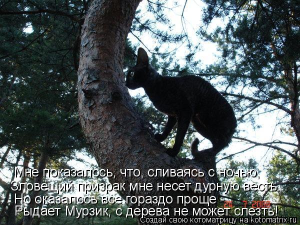 Котоматрица: Рыдает Мурзик, с дерева не может слезть! Но оказалось все гораздо проще -  Зловещий призрак мне несет дурную весть... Мне показалось, что, слив